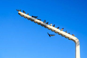 protocollo salva-uccelli