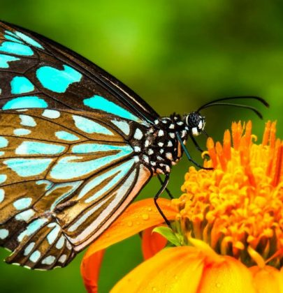 La scomparsa delle farfalle, tra vent'anni la metà degli insetti nelle aree temperate sarà estinto