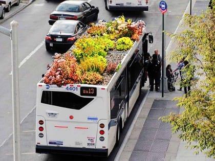 giardini pensili sugli autobus