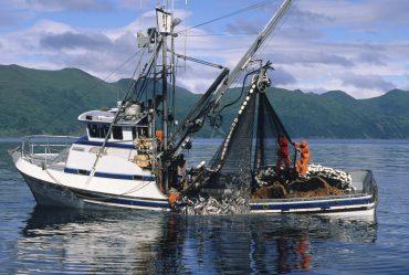 pesca delle acciughe