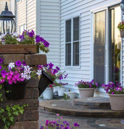 Vacanze: come curare le piante durante l'assenza da casa ed evitare che appassiscano