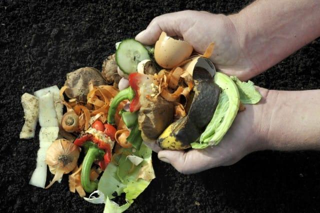 scarti vegetali per bioplastica