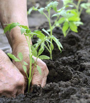 Agosto nell'orto: cosa seminare, i lavori da fare e le prelibatezze da raccogliere