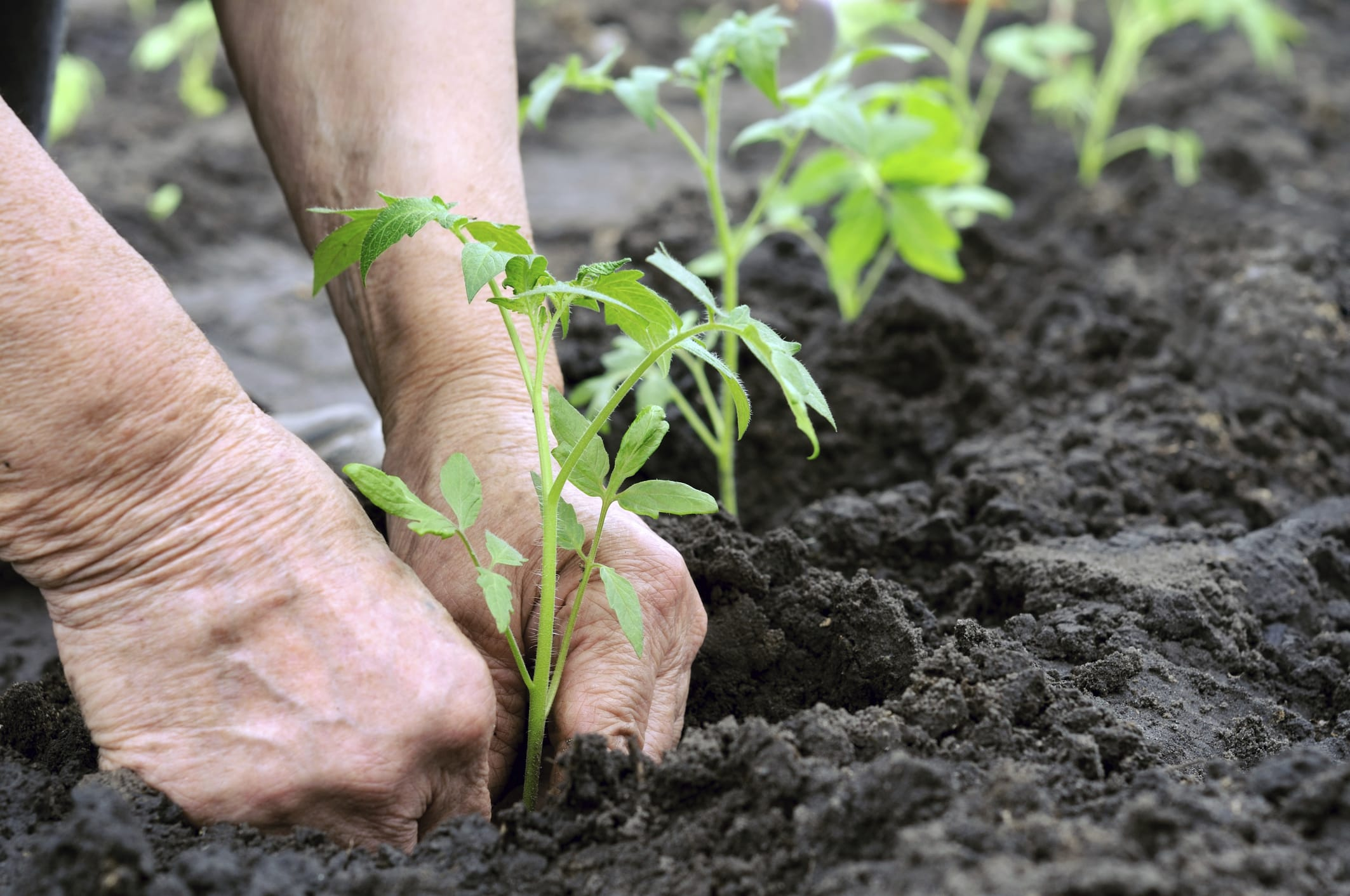 Cosa Cucinare Ad Agosto lavori orto agosto - non sprecare