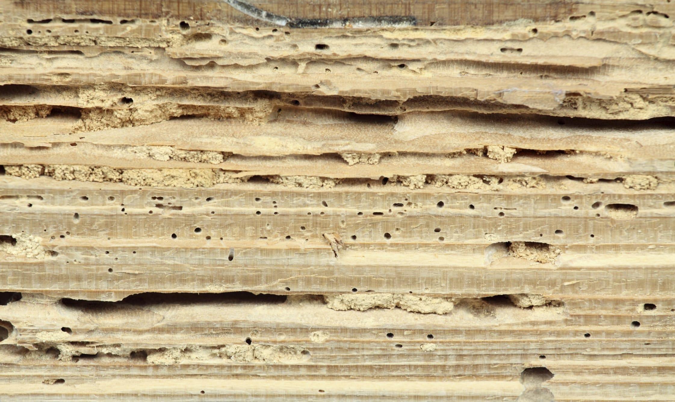 Come Pulire Il Legno Vecchio rimedi naturali per eliminare tarli e tarme - non sprecare