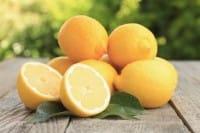 Come coltivare i limoni in vaso sul balcone