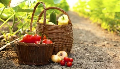 TerraXchange, il portale che permette di coltivare gli orti rimasti incolti
