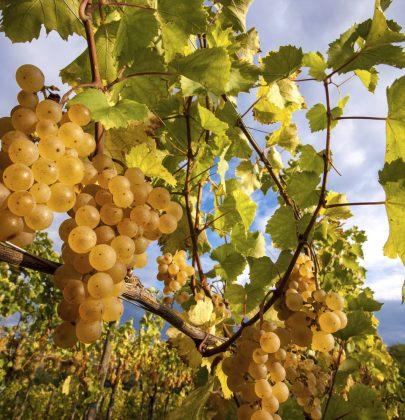 Emmanuel Giboulot: viticoltore biodinamico simbolo della Resistenza Naturale