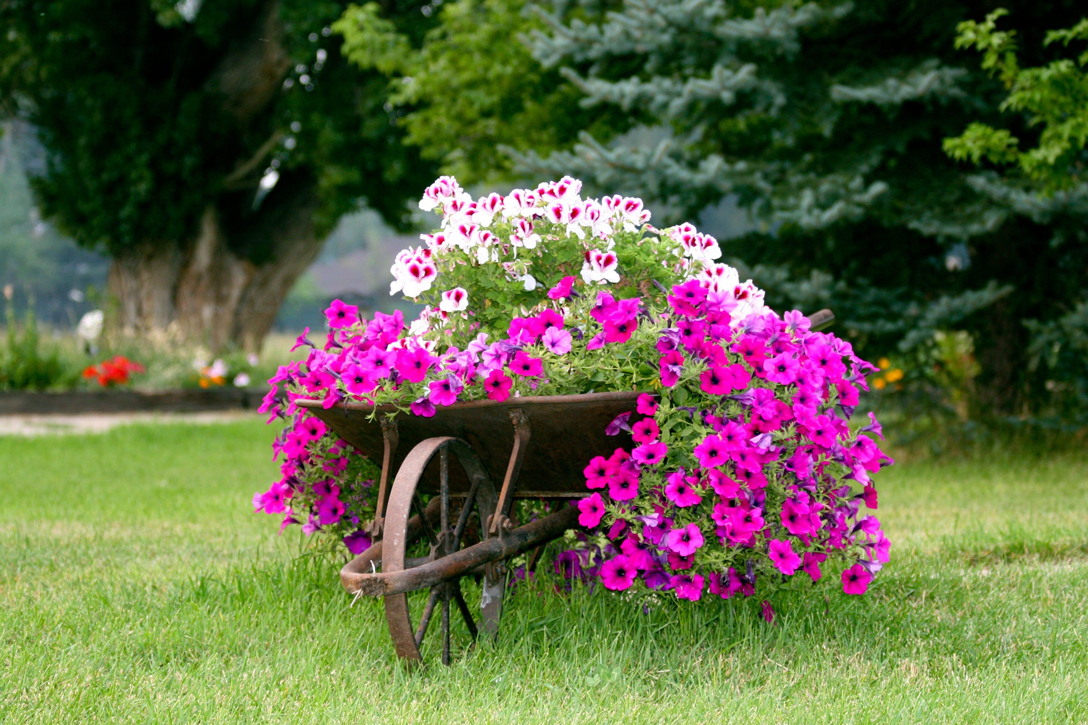 Immagini Piante E Fiori coltivare piante e fiori garantisce benessere   non sprecare