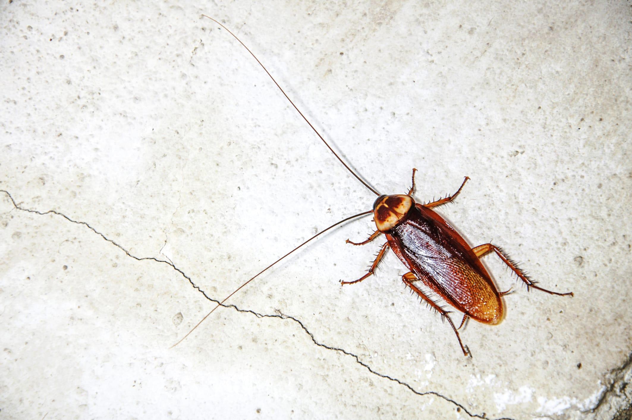 Prodotti Efficaci Contro Le Formiche rimedi naturali contro gli scarafaggi in casa - non sprecare