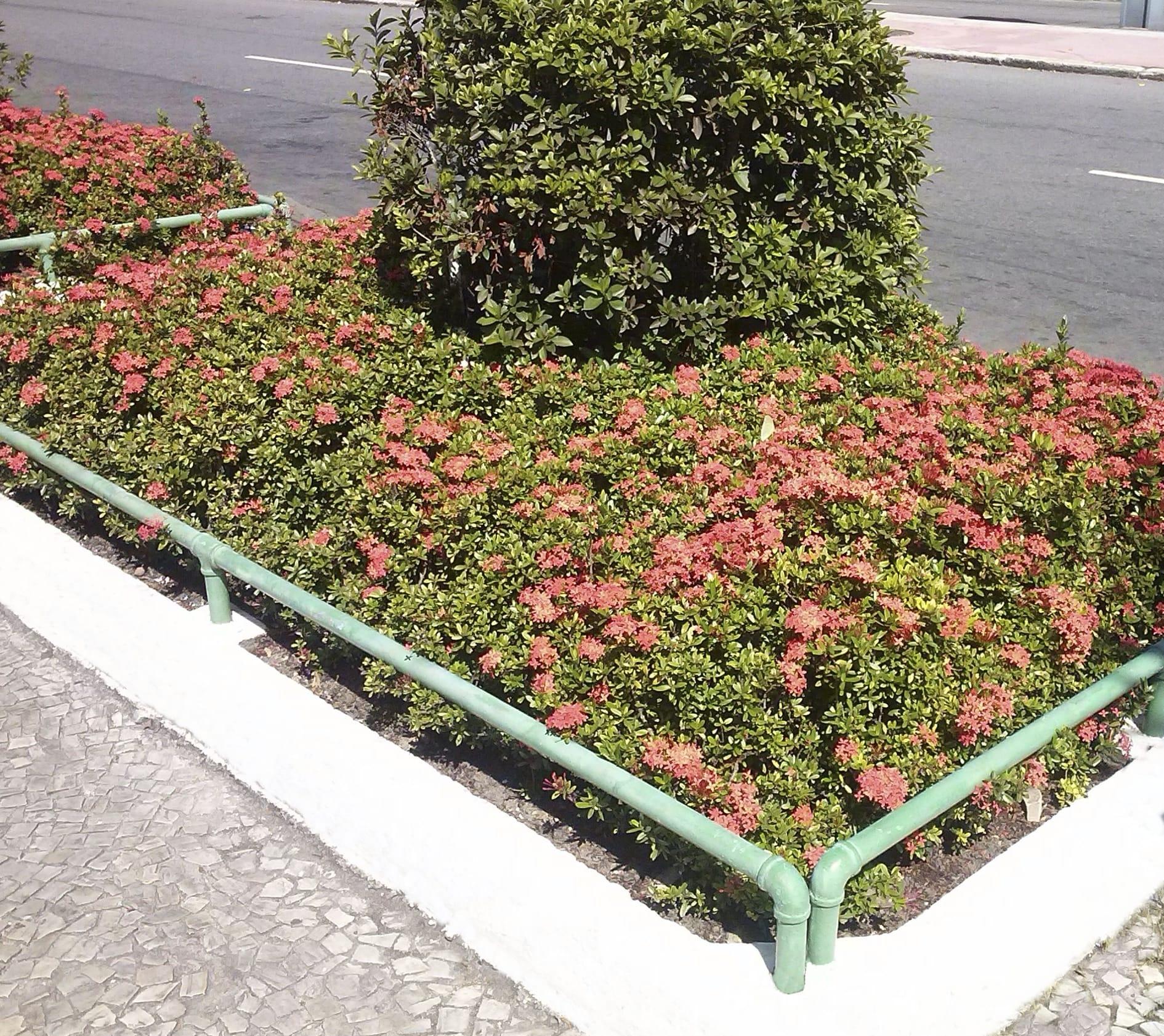 Piante Per Aiuole Perenni aiuole fiorite perenni con le graminacee in città - non sprecare