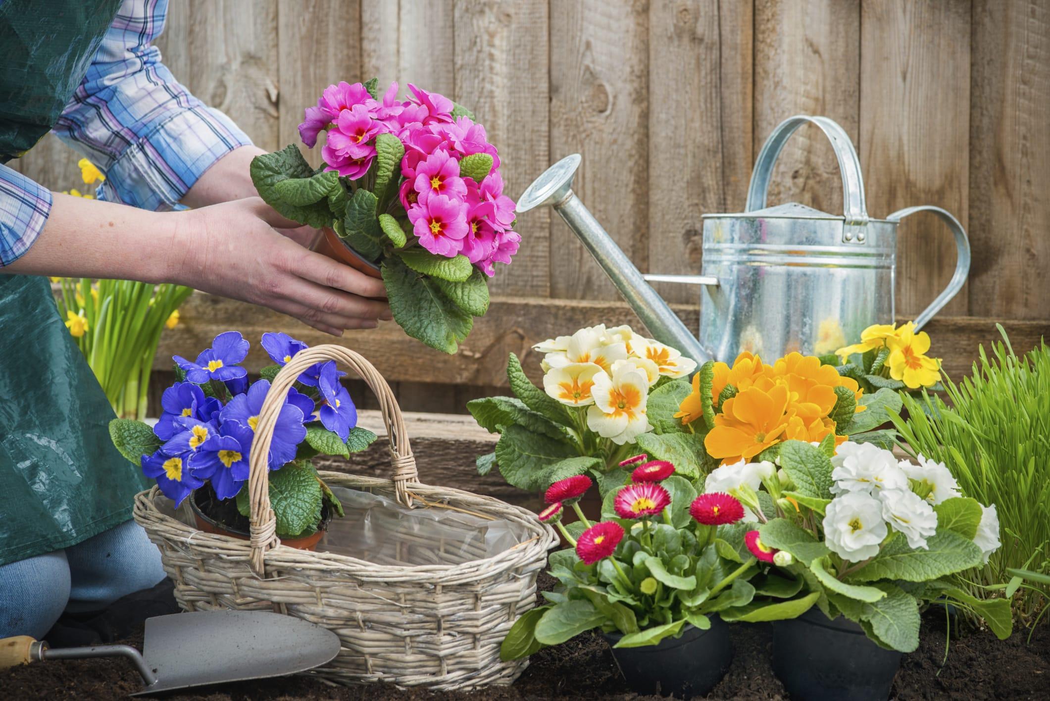 Come prevenire il mal di schiena causato dai lavori di giardinaggio