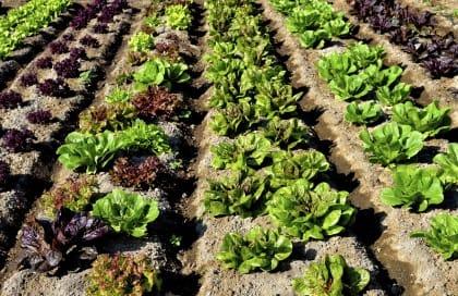 come coltivare orto