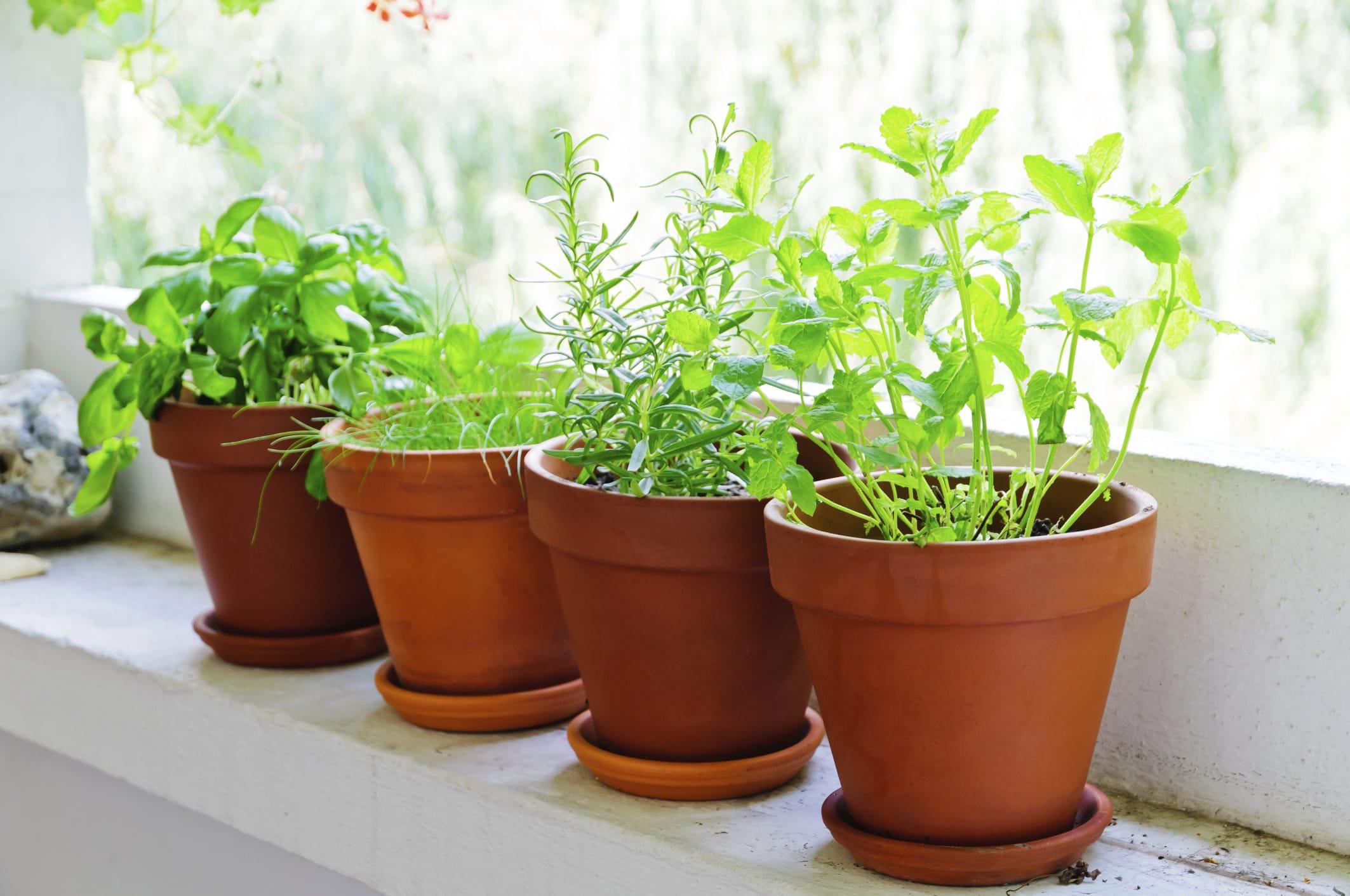 Coltivare In Casa Piante Aromatiche piante aromatiche da coltivare in casa - non sprecare