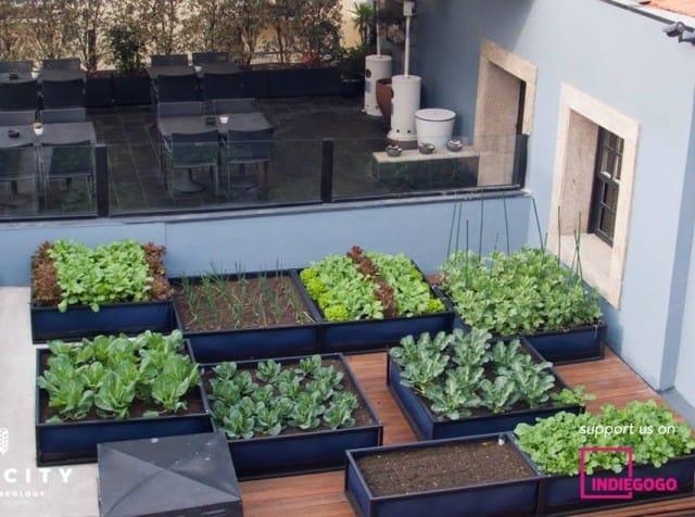 Come coltivare senza sprecare acqua