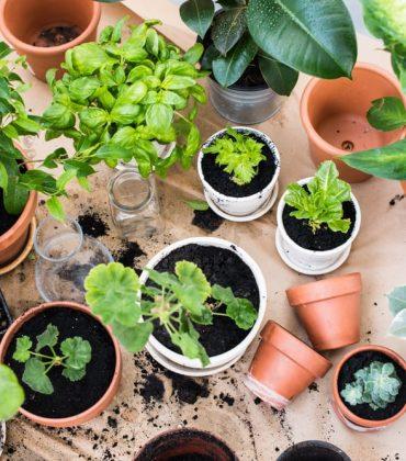 Orto in primavera: cosa coltivare, in giardino o sul balcone, e tutti i lavori necessari per ottenere un buon raccolto