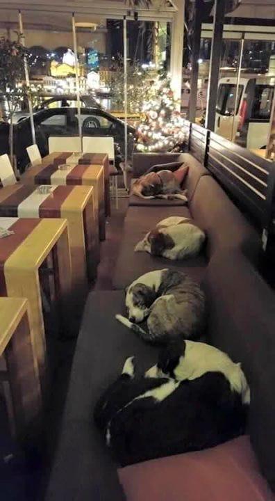 come-aiutare-cani-randagi-bar-grecia-lesbo-mitilene