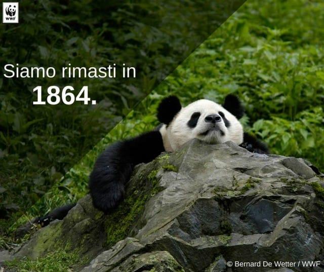 attivita-wwf-italia-tutela-animali-territorio-conservazione-natura (2)