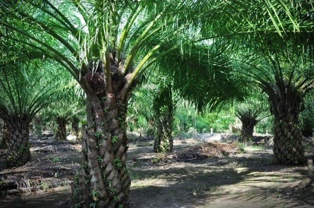 colussi-olio-di-palma (2)