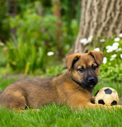 Come giocare con i cani, la regola del calzino. Evitate luoghi dove ci sono altri cani