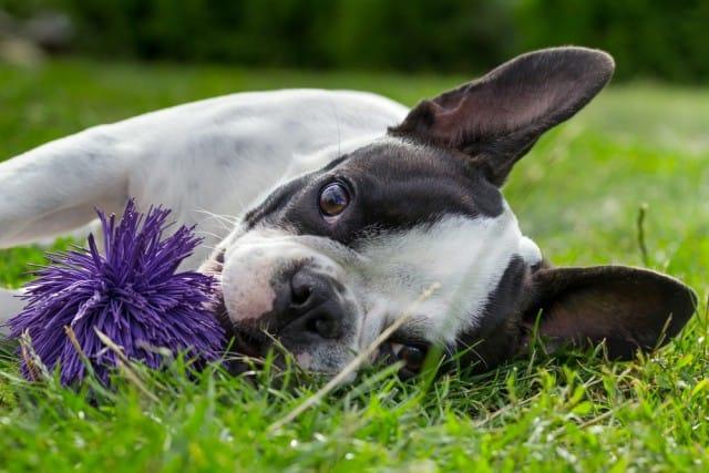 come-giocare-con-il-cane (2)