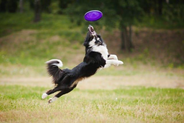 come-giocare-con-il-cane (8)