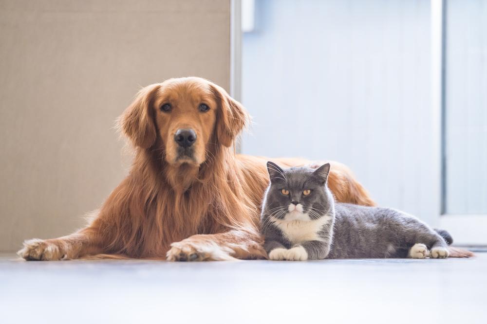 come tenere casa pulita con un cane