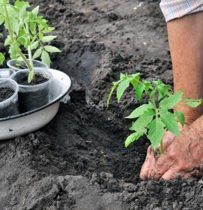 Cosa coltivare a marzo e i lavori da fare nell'orto. Per cominciare: eliminate le erbe infestanti
