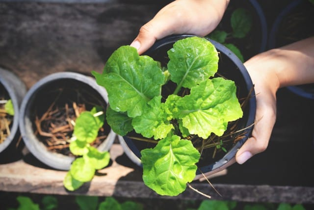 cosa-coltivare-marzo-lavori-orto (2)