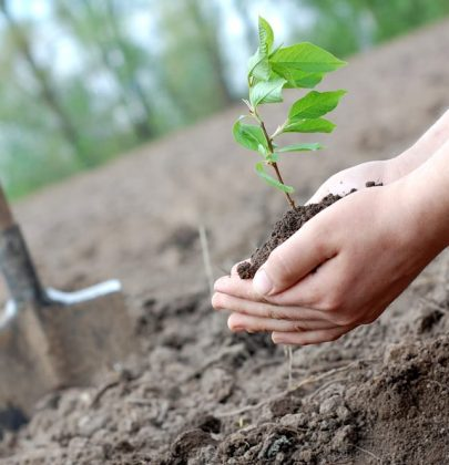 Piantare un albero allarga i confini (Michael Pollan)