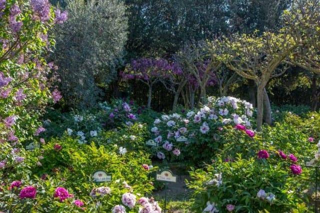 centro-botanico-moutan-giardino-peonie (3)