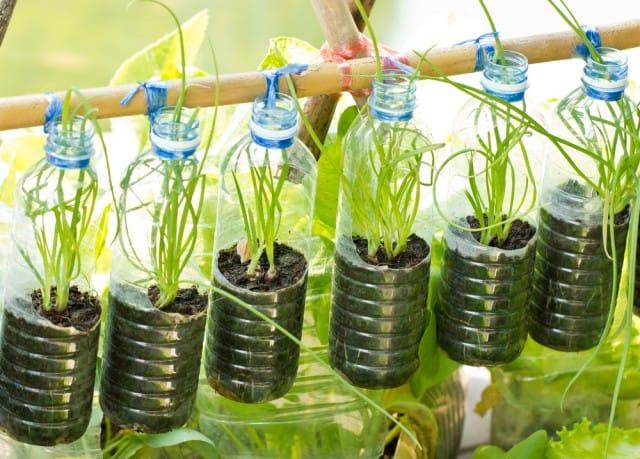 corsi-per-coltivare-orto-scuole-associazioni-italia (4)