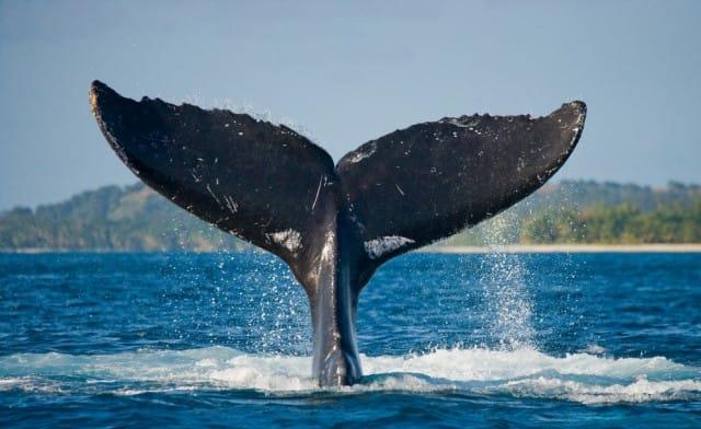 come-salvare-le-balene (2)