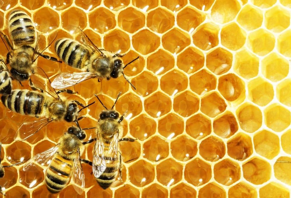 crollo produzione miele