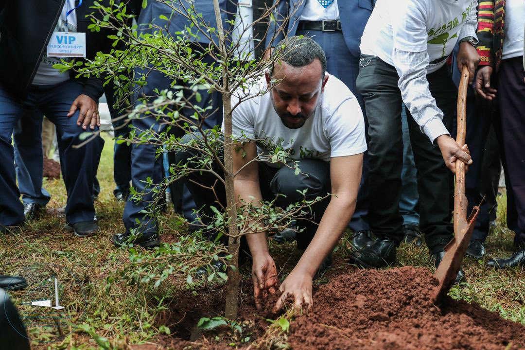 record di alberi piantati in un giorno