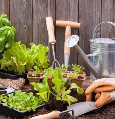 Insetticidi naturali: come prepararli, facilmente, con gli ingredienti che abbiamo in casa