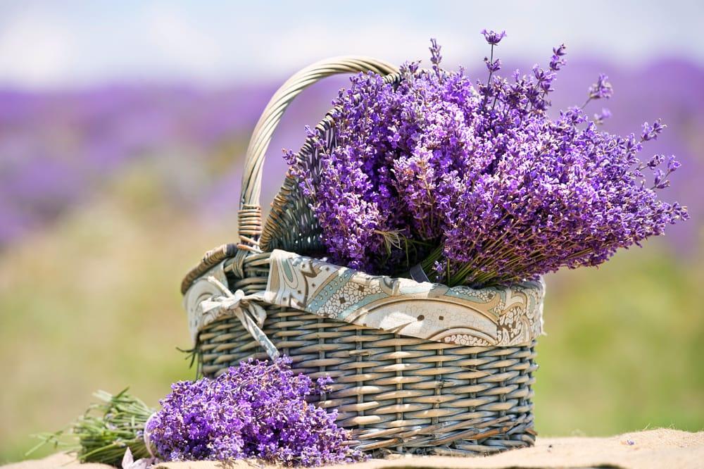 pesticidi naturali per orto