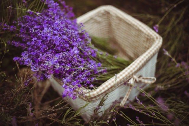 pesticidi-naturali-orto (3)