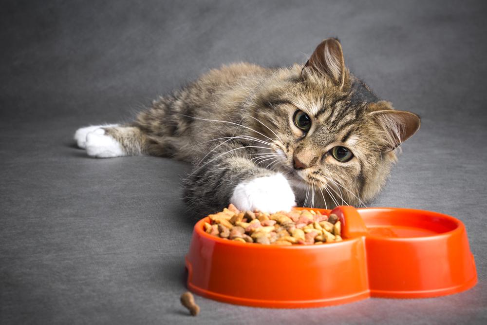 cibo per gatti fatto in casa