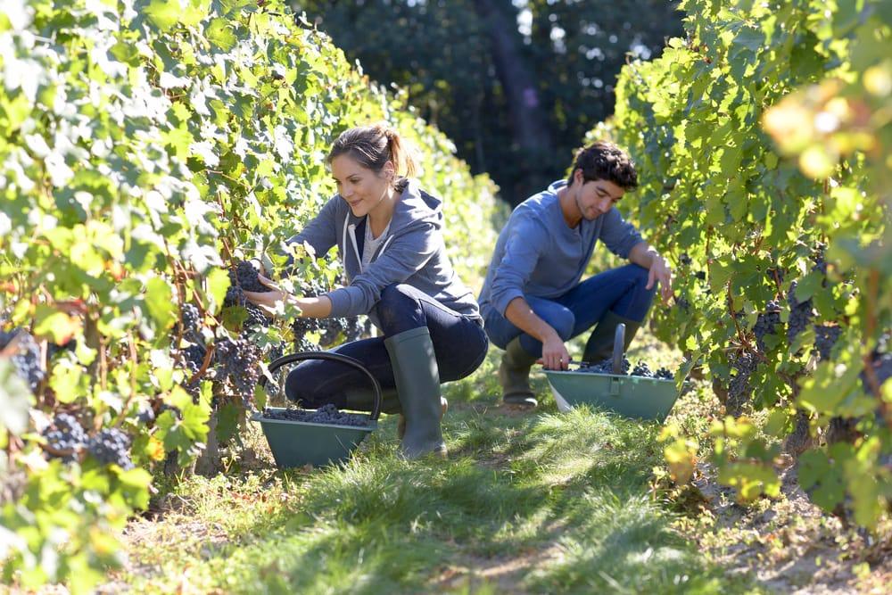occupazione-giovani-in-agricoltura-italia (2)