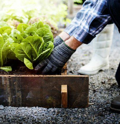 Cosa coltivare a febbraio, nell'orto o in vaso. Usate i teli per riparare le piante dalle gelate