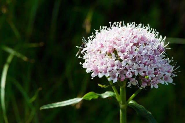 piante-antistress-quali-sono-benefici (1)