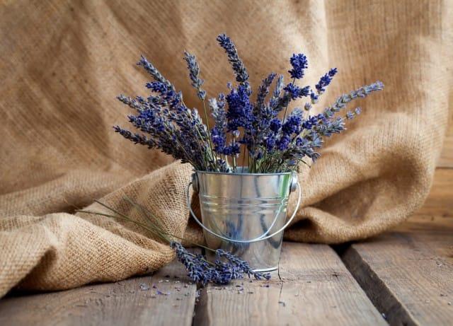 piante-antistress-quali-sono-benefici (3)