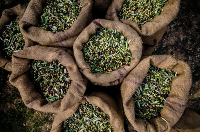 usi-alternativi-olio-oliva (3)