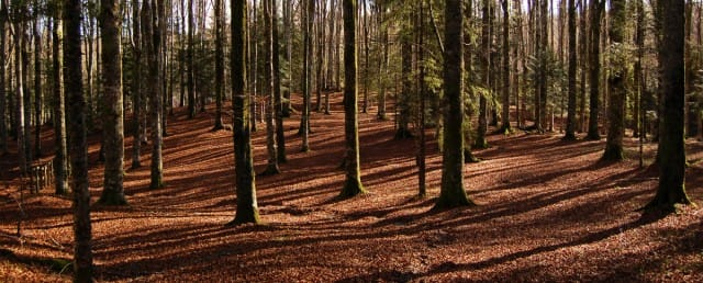 foreste-piu-belle-italia (1)
