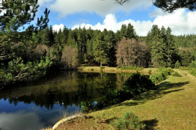 foreste-piu-belle-italia (3)
