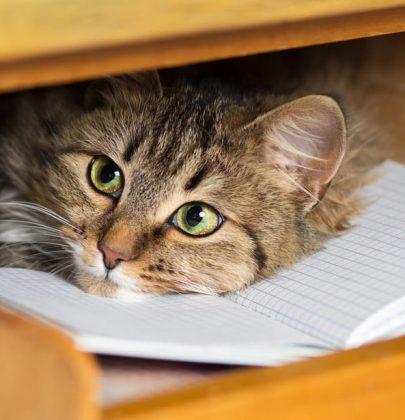 Come si gioca con i gatti, dalla scatola di cartone ai tiragraffi. Il castello con i vecchi cassetti (foto)