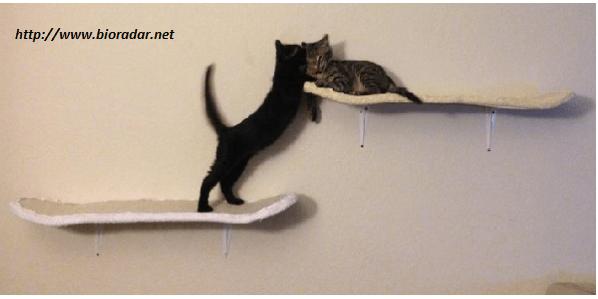 giochi-fai-da-te-per-gatti (2)