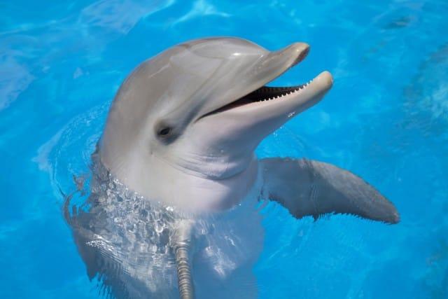 problema delfini eolie