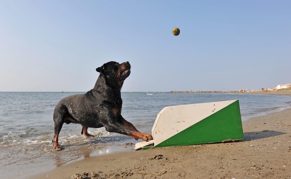 sport-con-cani-1